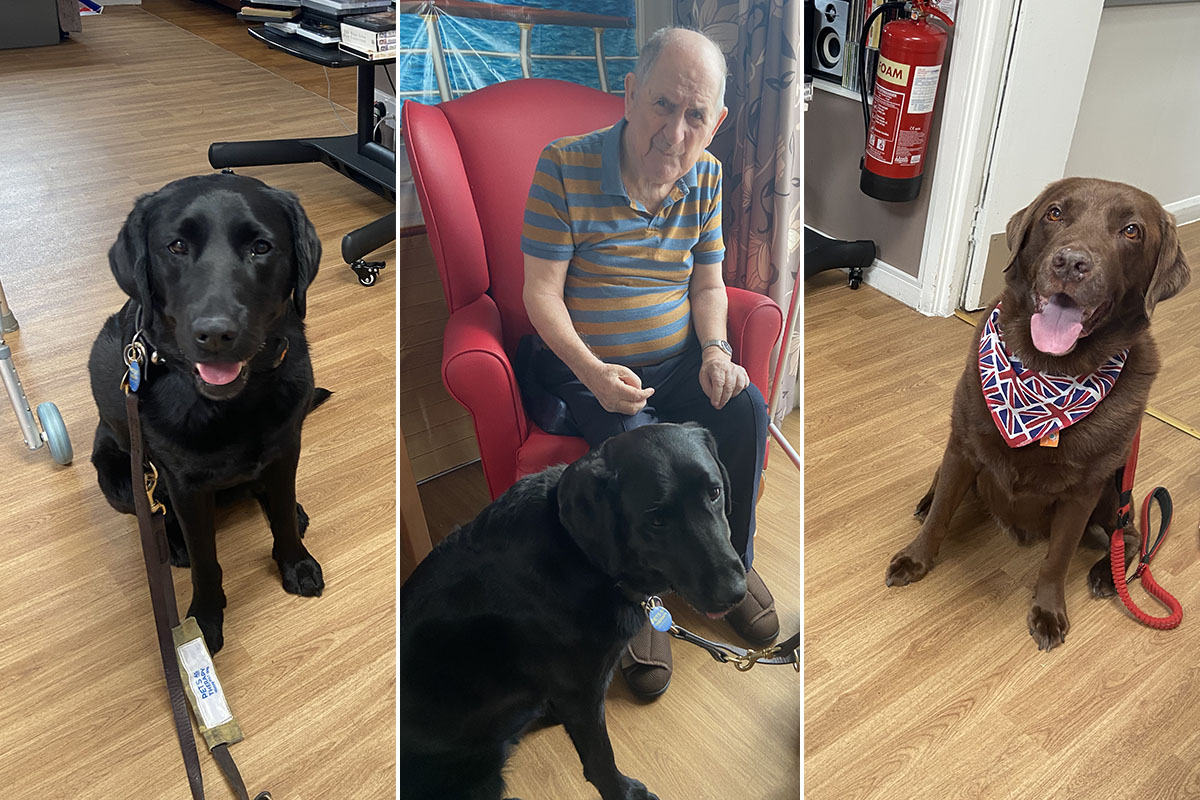Meyer House Care Home welcome Therapy Dog Suzy